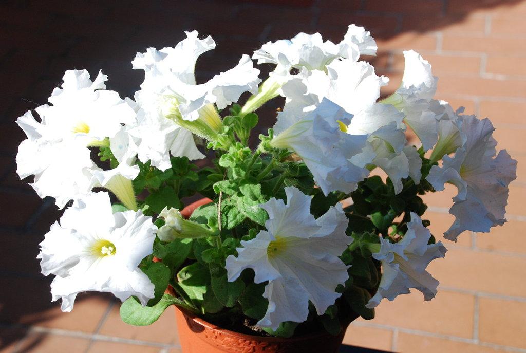 Como cuidar una planta perfect plantas muy resistentes y fciles de cuidar with como cuidar una - Plantas de invierno ...